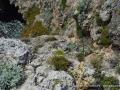 Ripristino vegetazione Giannutri_M.Giunti (14)