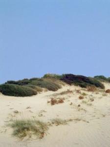 O.Casnati_dune lacona_web